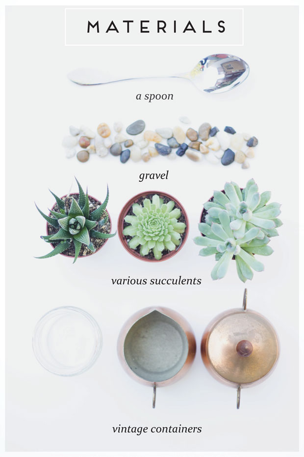 what materials do you need to plant succulents