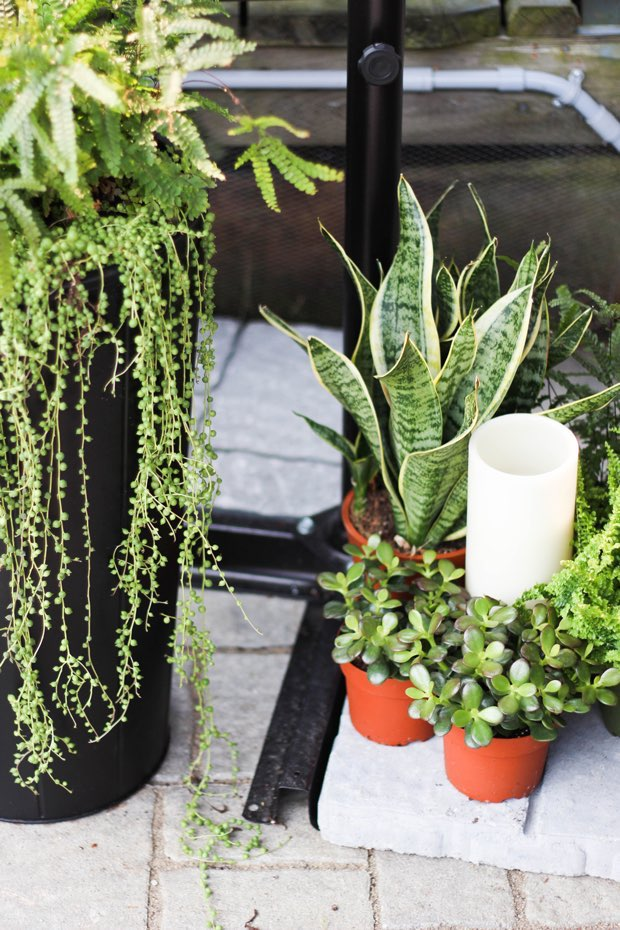 succulents-and-snake-plant-outdoor-patio