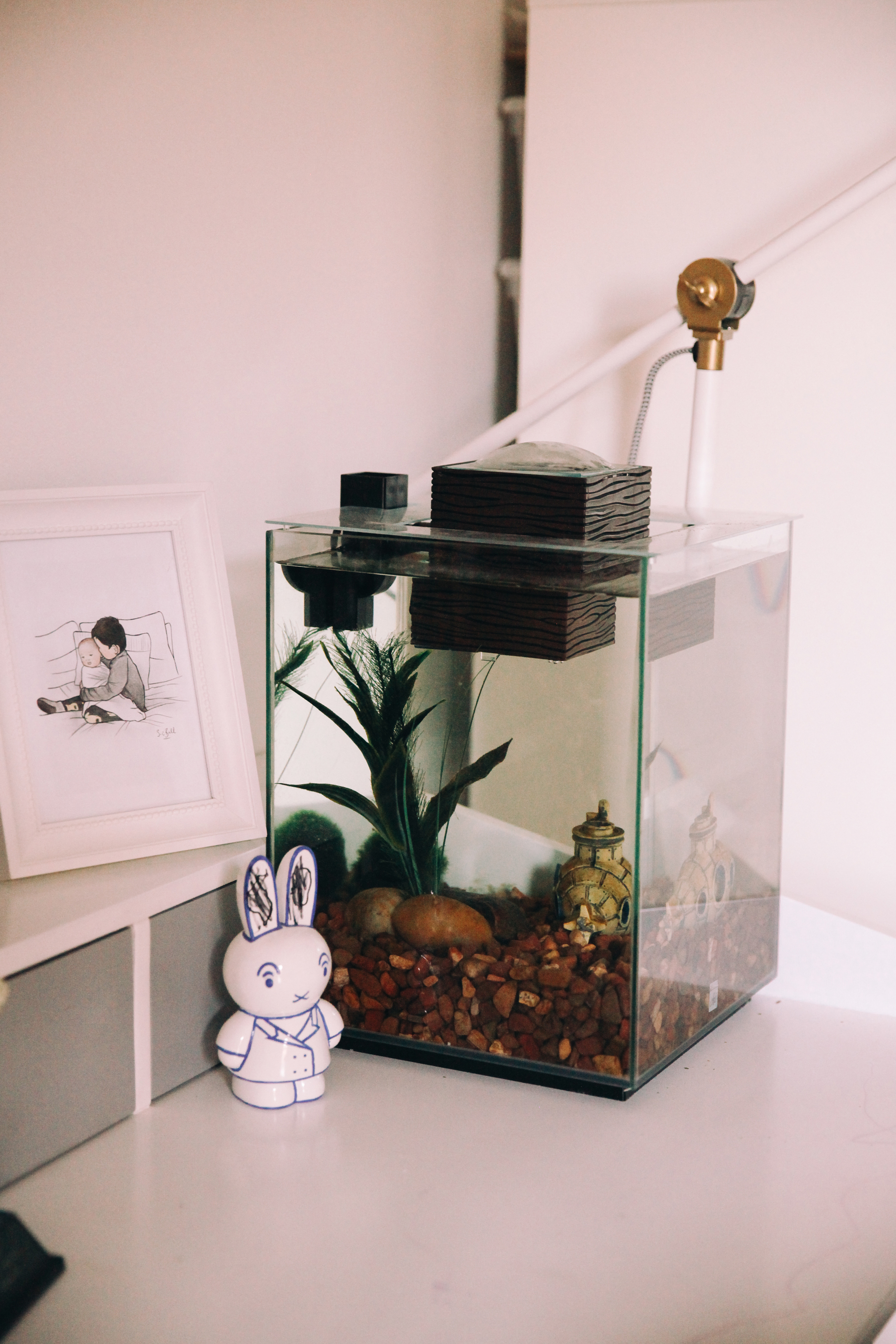 The day our fish died bluebirdkisses for Empty fish tank